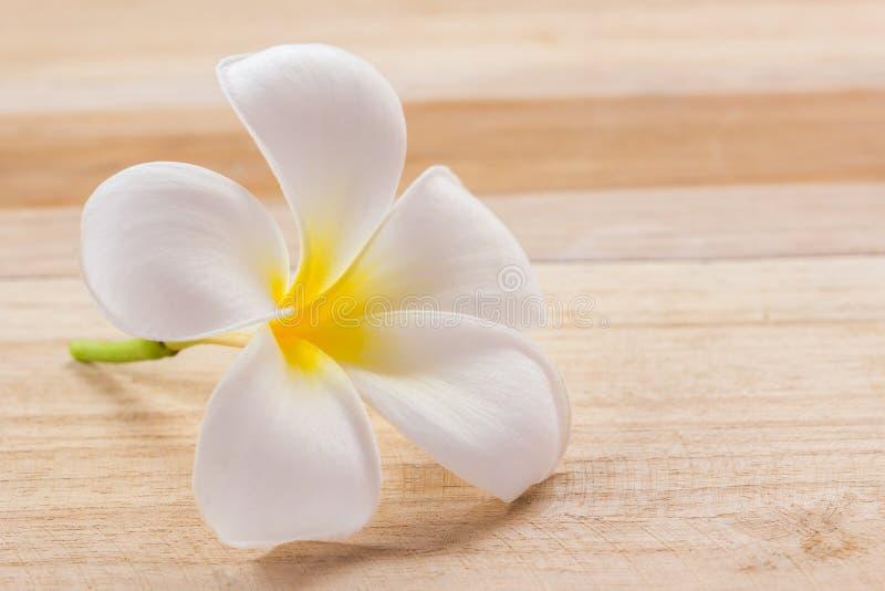 Φρέσκο λουλούδι frangipani στον ξύλινο πίνακα στοκ φωτογραφία με δικαίωμα ελεύθερης χρήσης