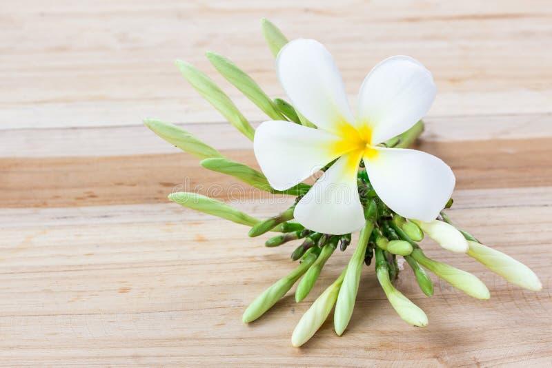 Φρέσκο λουλούδι frangipani στον ξύλινο πίνακα στοκ εικόνες με δικαίωμα ελεύθερης χρήσης