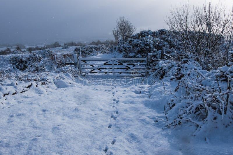 Φρέσκο πεσμένο, άθικτο χιόνι στη Βόρεια Ιρλανδία στοκ εικόνες