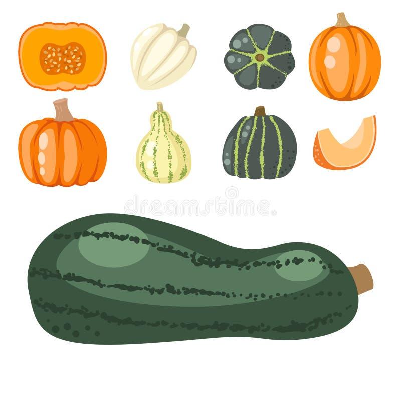Φρέσκο πορτοκαλί οργανικό υγιές χορτοφάγο φυτικό διάνυσμα τροφίμων κολοκύθας διακοσμητικό εποχιακό ώριμο ελεύθερη απεικόνιση δικαιώματος