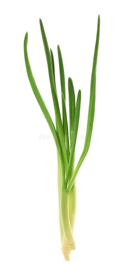 Φρέσκο πράσινο λάφυρο που απομονώνεται στοκ φωτογραφία με δικαίωμα ελεύθερης χρήσης