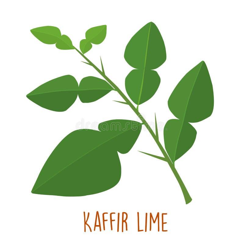 Φρέσκο πράσινο αρωματικό φύλλο ασβέστη kaffir διανυσματική απεικόνιση