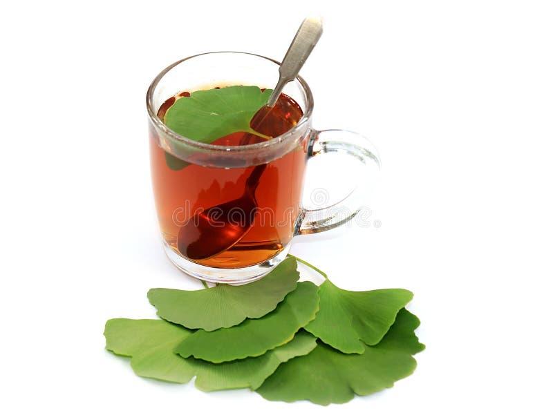 Φρέσκο πράσινο βοτανικό τσάι στοκ φωτογραφία με δικαίωμα ελεύθερης χρήσης