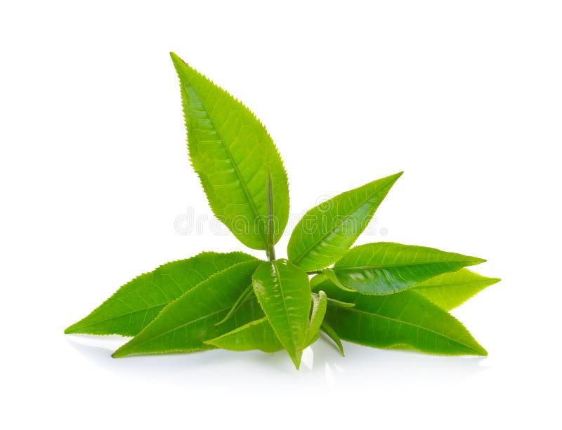 φρέσκο πράσινο λευκό τσα&gam στοκ φωτογραφία με δικαίωμα ελεύθερης χρήσης