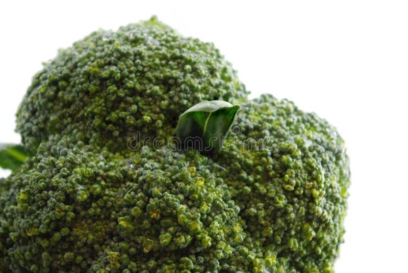 φρέσκο πράσινο μακρο λε&upsilon στοκ φωτογραφία με δικαίωμα ελεύθερης χρήσης