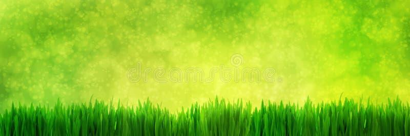Φρέσκο πράσινο πανόραμα χλόης στο φυσικό υπόβαθρο φύσης θαμπάδων στοκ εικόνα