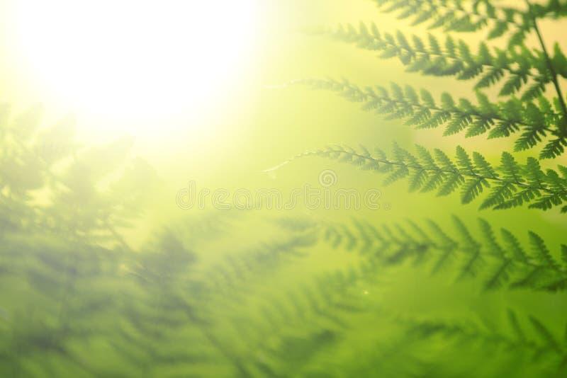 Φρέσκο πράσινο υπόβαθρο φύλλων φτερών στοκ εικόνα με δικαίωμα ελεύθερης χρήσης