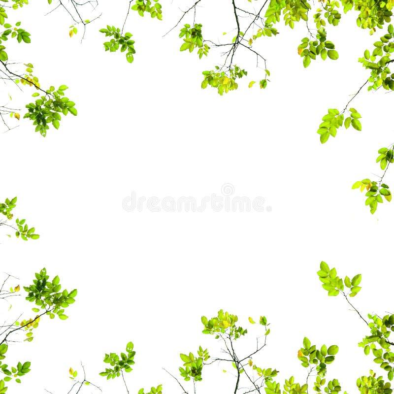Φρέσκο πράσινο υπόβαθρο φύλλων στοκ εικόνα