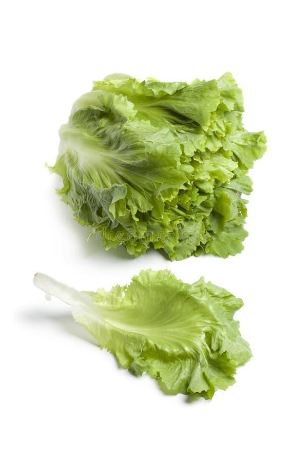 φρέσκο πράσινο φύλλο αντι&del στοκ φωτογραφία με δικαίωμα ελεύθερης χρήσης