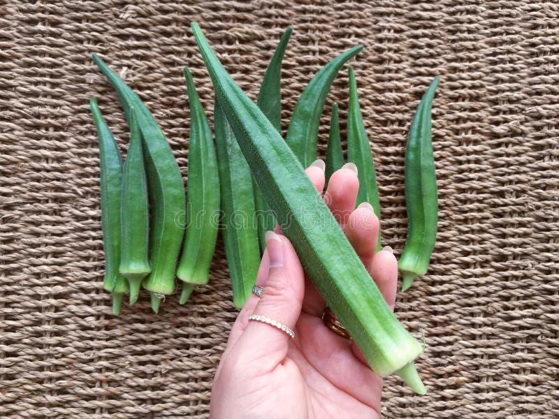 Φρέσκο πράσινο okra στοκ φωτογραφίες