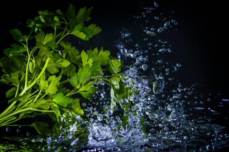Φρέσκο ράντισμα μαϊντανού στο νερό πέρα από το Μαύρο στοκ εικόνα