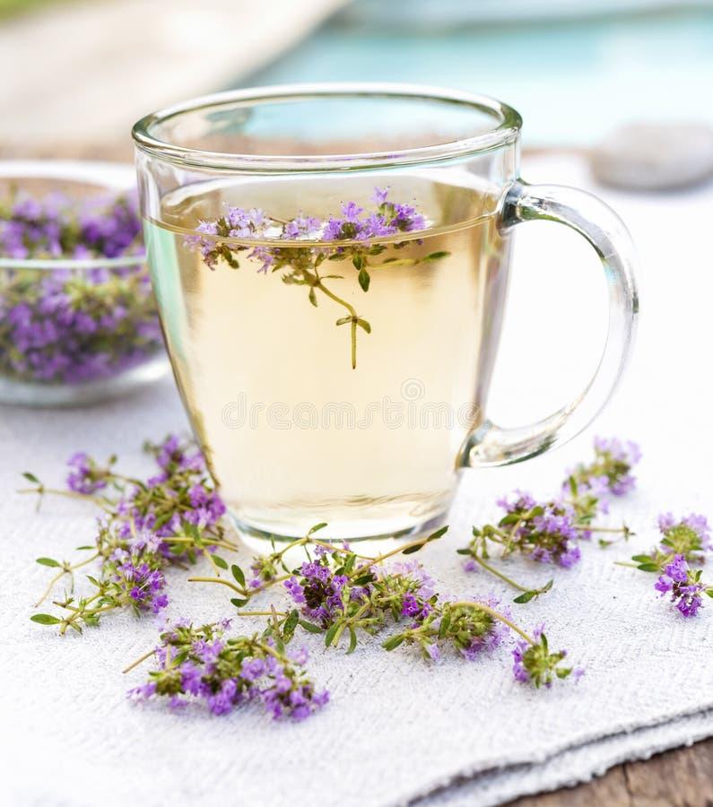 Φρέσκο τσάι θυμαριού στοκ εικόνες