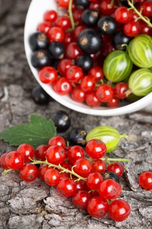 Φρέσκο υπόβαθρο φρούτων μούρων στοκ εικόνες