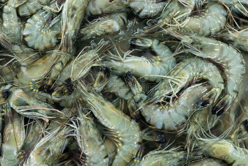 Φρέσκο υπόβαθρο srimps Γαρίδες σε μια τοπική αγορά του τροπικού νησιού του Μπαλί, Ινδονησία Υπόβαθρο θαλασσινών στοκ εικόνες με δικαίωμα ελεύθερης χρήσης