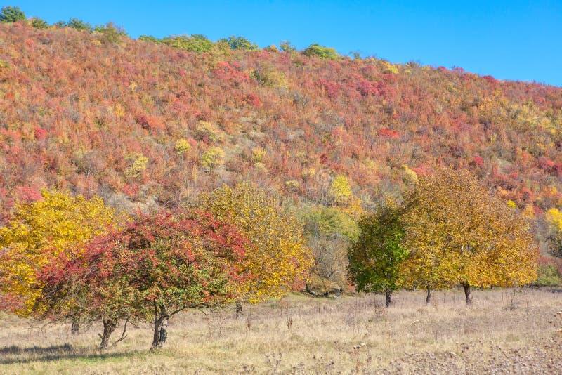 Φρέσκο φθινόπωρο στοκ εικόνες με δικαίωμα ελεύθερης χρήσης