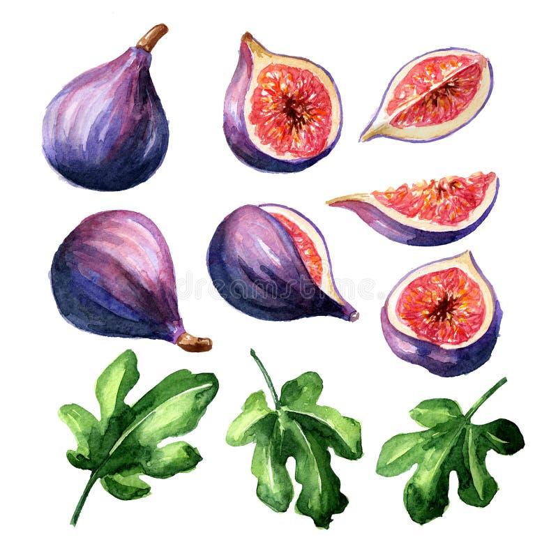 Φρέσκο ώριμο πορφυρό σύνολο φρούτων και φύλλων σύκων r στοκ φωτογραφία με δικαίωμα ελεύθερης χρήσης