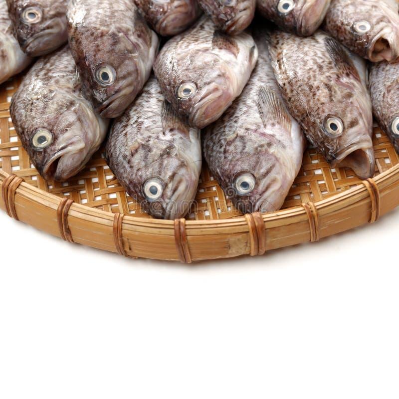 Φρέσκο Grouper στοκ φωτογραφία