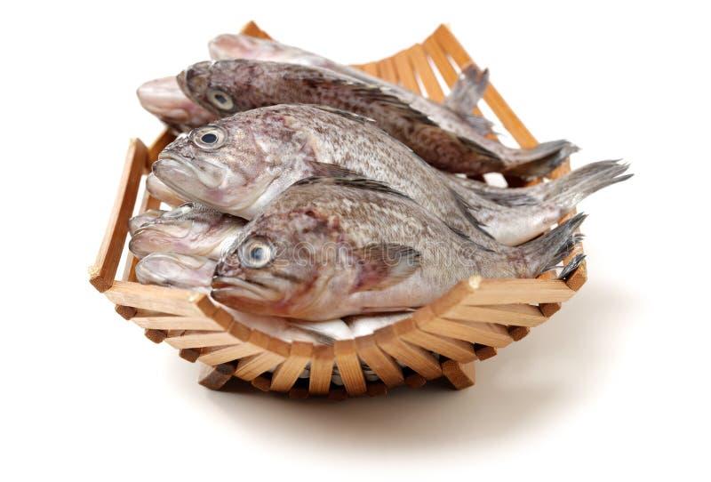 Φρέσκο grouper στοκ φωτογραφία με δικαίωμα ελεύθερης χρήσης