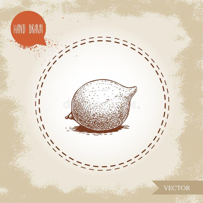 Φρέσκο macadamia καρύδι Συρμένη χέρι διανυσματική απεικόνιση ύφους σκίτσων στο παλαιό υπόβαθρο Τρόφιμα και καλλυντικό σχέδιο συστ απεικόνιση αποθεμάτων