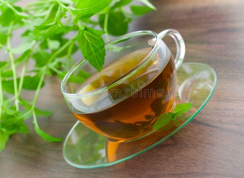 φρέσκο peppermint τσάι στοκ φωτογραφίες με δικαίωμα ελεύθερης χρήσης
