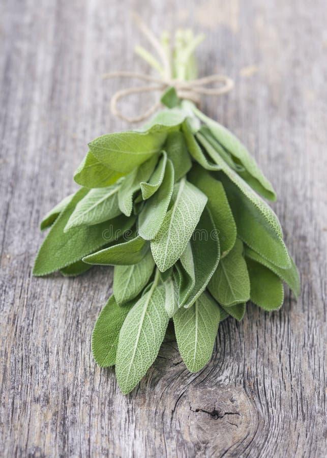 Φρέσκο Salvia στοκ εικόνες με δικαίωμα ελεύθερης χρήσης