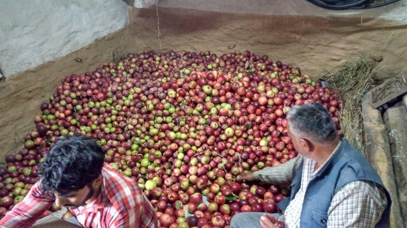 Φρέσκο shimla συσκευασίας κιβωτίων μήλων στοκ εικόνες με δικαίωμα ελεύθερης χρήσης
