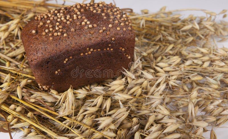 Φραντζόλα του σπιτικού ψωμιού με τους σπόρους μαύρης μουστάρδας στον πίνακα με spikelets και τις βρώμες σίκαλης στοκ φωτογραφίες