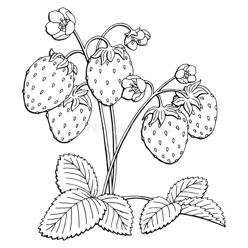 Φραουλών γραφική απεικόνιση σκίτσων θάμνων μαύρη απομονωμένη λευκό απεικόνιση αποθεμάτων