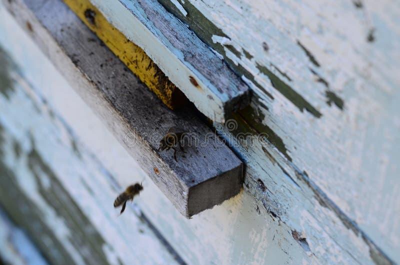 Φρουρά μελισσών στοκ φωτογραφίες με δικαίωμα ελεύθερης χρήσης