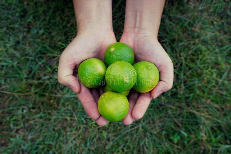 Φρούτα ασβέστη εκμετάλλευσης χεριών στοκ εικόνες