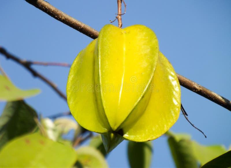 φρούτα αστεριών σε ένα δέντρο στοκ εικόνες