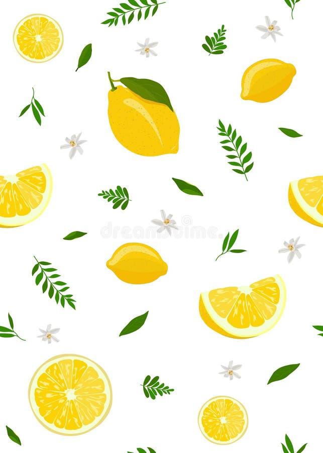 Φρούτα λεμονιών και άνευ ραφής σχέδιο φετών με τα χαριτωμένα φύλλα στο άσπρο υπόβαθρο citrus fruit απεικόνιση αποθεμάτων
