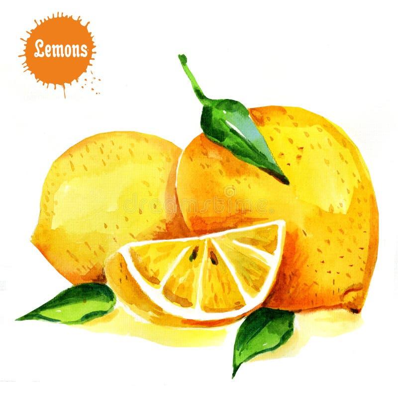 Φρούτα λεμονιών με το φύλλο που απομονώνεται στο άσπρο υπόβαθρο Εικόνες Watercolor διανυσματική απεικόνιση