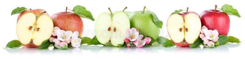 Φρούτα μήλων φρούτων της Apple σε μια σειρά που τεμαχίζεται που απομονώνεται στο λευκό ελεύθερη απεικόνιση δικαιώματος