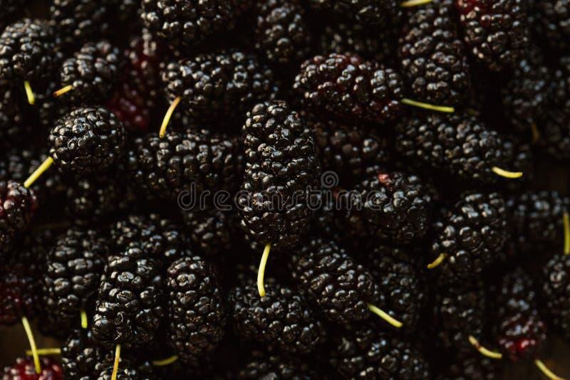 Φρούτα μουριών στο κύπελλο Μουριά κατασκευασμένη Τοπ όψη στοκ εικόνα