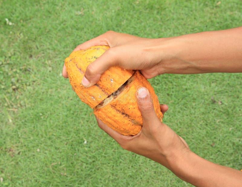 Φρούτα σοκολάτας στοκ φωτογραφία με δικαίωμα ελεύθερης χρήσης
