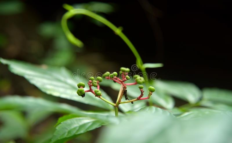 Φρούτα στη δασική φύση στο πράσινο υπόβαθρο στοκ φωτογραφίες με δικαίωμα ελεύθερης χρήσης