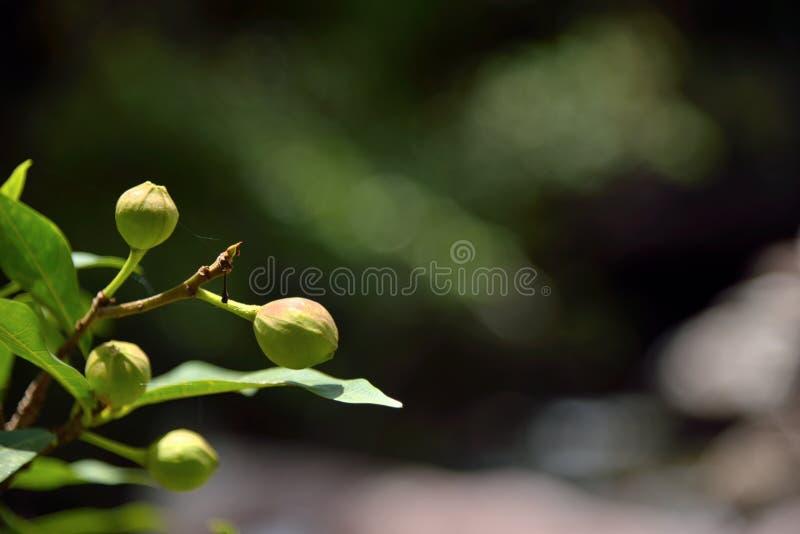 Φρούτα στη δασική φύση στο πράσινο υπόβαθρο στοκ φωτογραφία με δικαίωμα ελεύθερης χρήσης