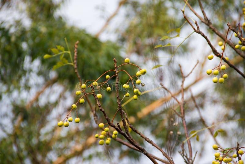 Φρούτα του δέντρου το καλοκαίρι στοκ φωτογραφίες με δικαίωμα ελεύθερης χρήσης
