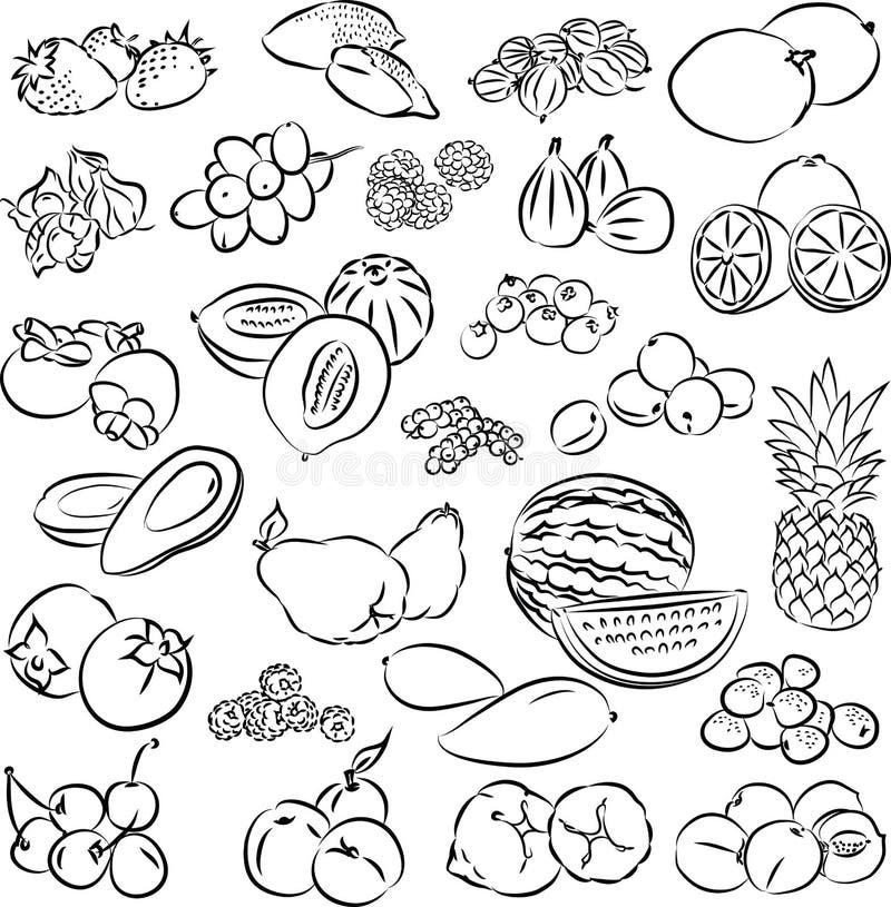 Φρούτα διανυσματική απεικόνιση