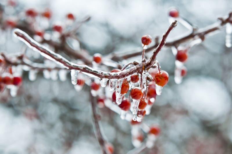 Φρούτα coverd στη βροχή παγώματος στοκ εικόνα με δικαίωμα ελεύθερης χρήσης