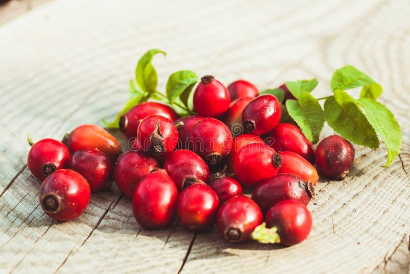 Φρούτα Dogrose στοκ εικόνες