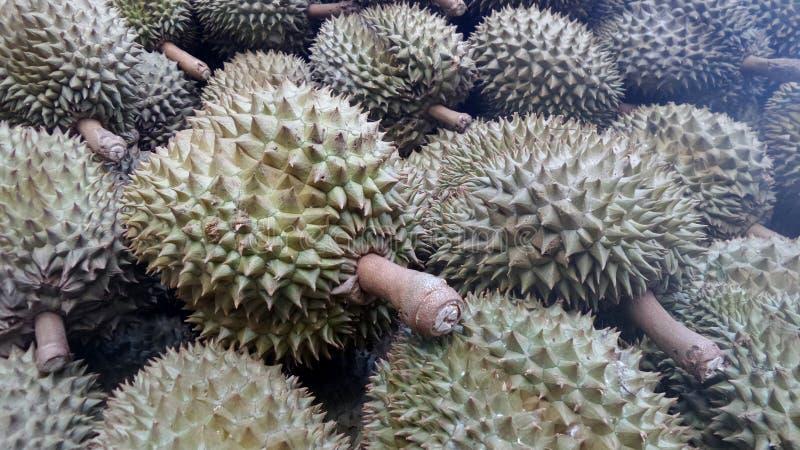 Φρούτα Durian στοκ φωτογραφία με δικαίωμα ελεύθερης χρήσης