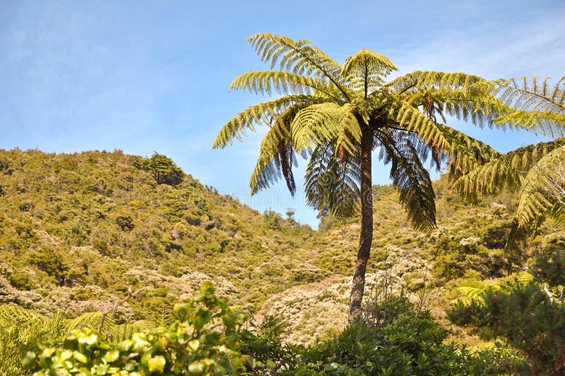 Φτέρη δέντρων στοκ φωτογραφίες