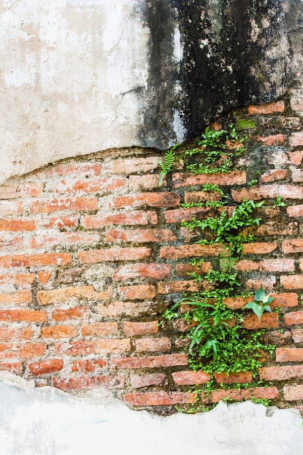 Φτέρη που ζει στον τοίχο τούβλων στοκ φωτογραφία με δικαίωμα ελεύθερης χρήσης