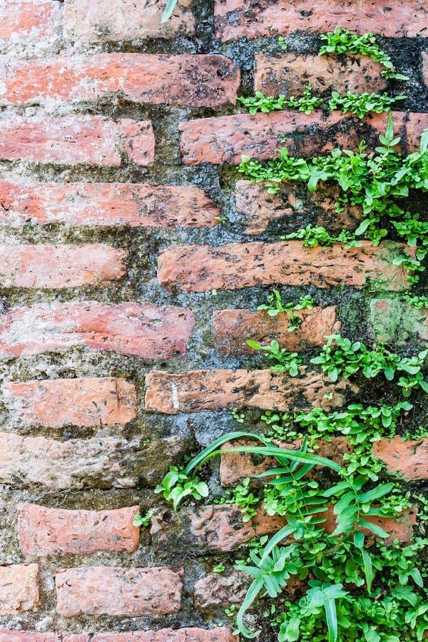 Φτέρη που ζει στον τοίχο τούβλων στοκ φωτογραφίες με δικαίωμα ελεύθερης χρήσης