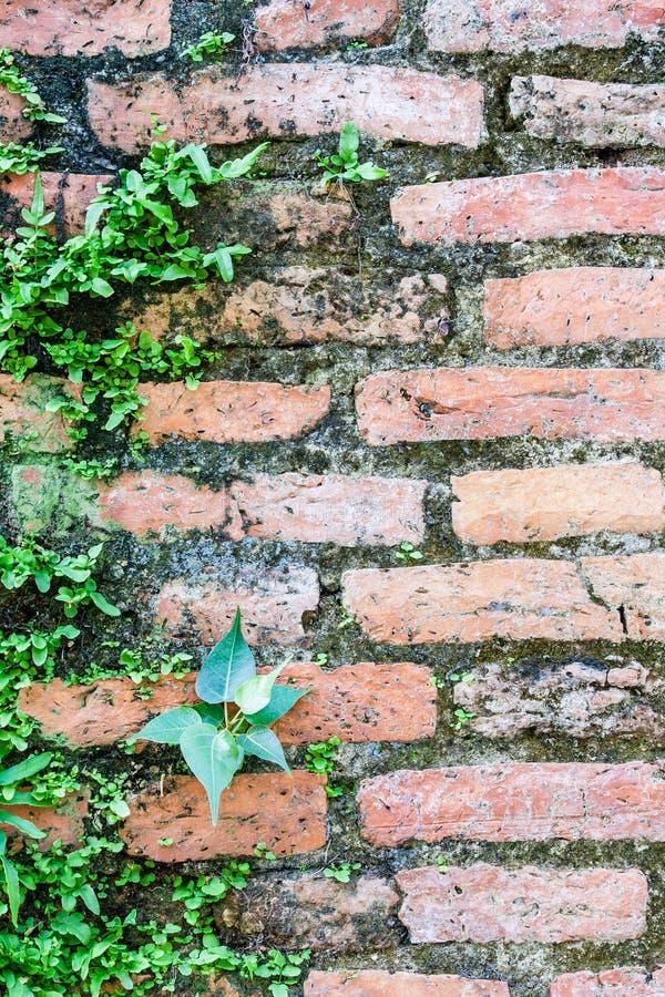 Φτέρη που ζει στον τοίχο τούβλων στοκ φωτογραφίες