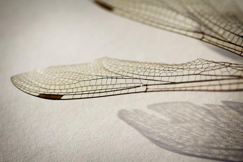 Φτερά λιβελλουλών στοκ φωτογραφία με δικαίωμα ελεύθερης χρήσης