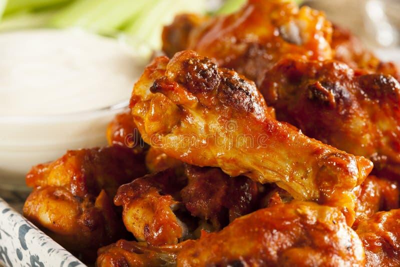 Φτερά κοτόπουλου καυτών και Buffalo Spicey στοκ εικόνα