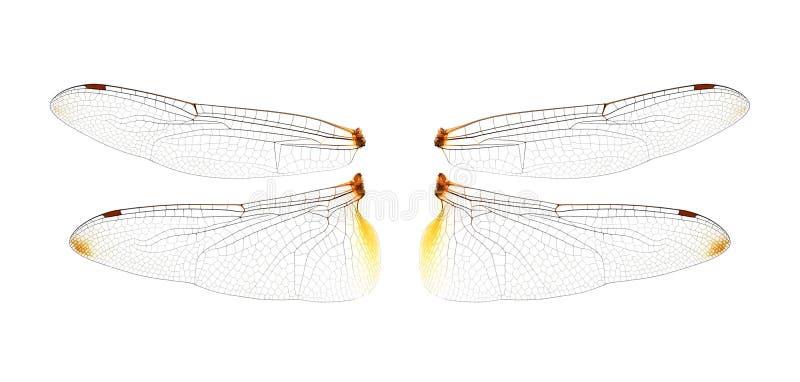 Φτερά λιβελλουλών στο άσπρο υπόβαθρο στοκ φωτογραφίες
